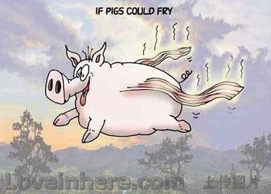 飞天少女猪