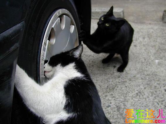 汽车修理工