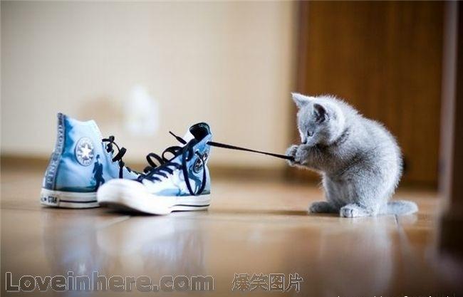 鞋带解来可以做我小窝了