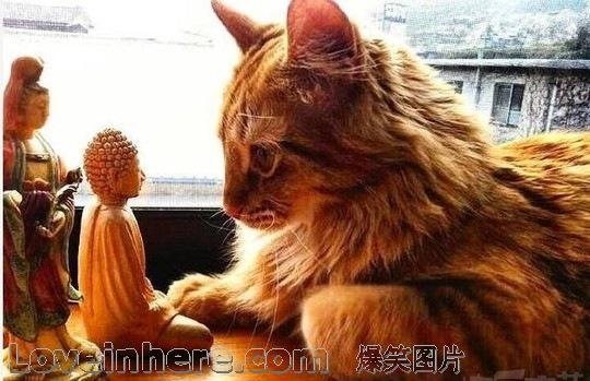 猫咪:我在佛前苦苦求了几千条小鱼干