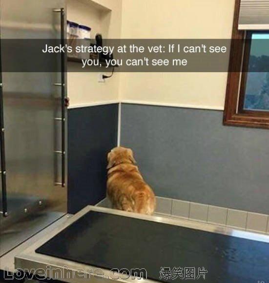 狗狗准则:如果我看不见兽医,那兽医也看不见我,兽医在哪