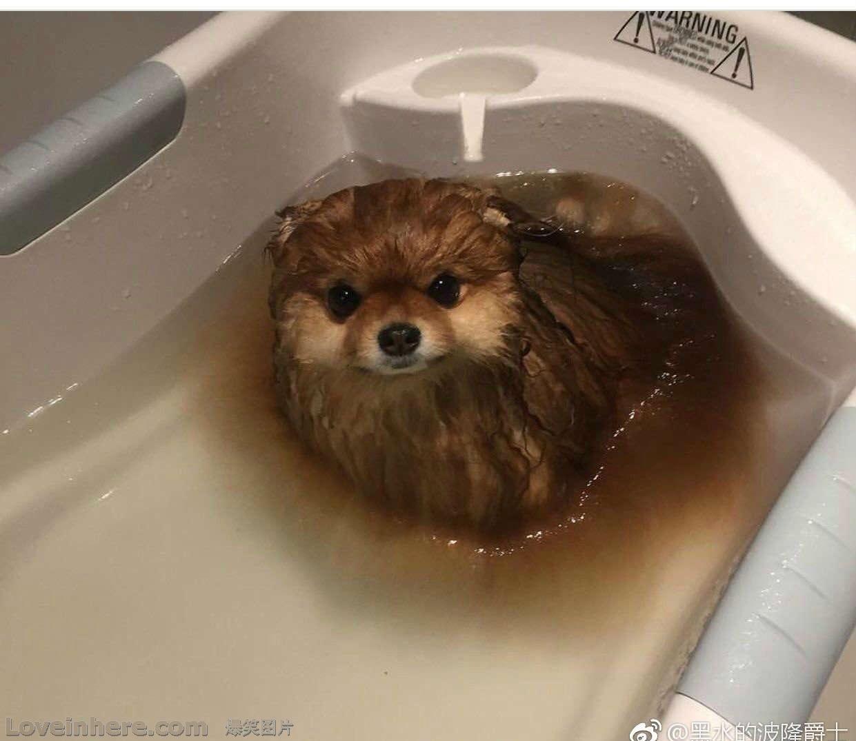 警告:狗在水中会溶解,化了