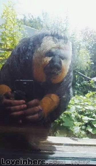 本狒狒就是喜欢玩手机啊,有什么问题吗?小心啊