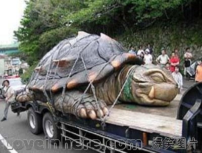 中国最贵的乌龟图片_中国乌龟图片_中国本地乌龟 ...