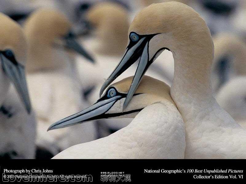 唯美风光动物图片选集